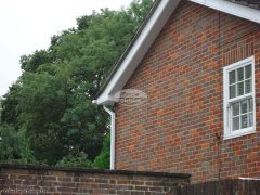 white bargeboards soffits replacement Slough